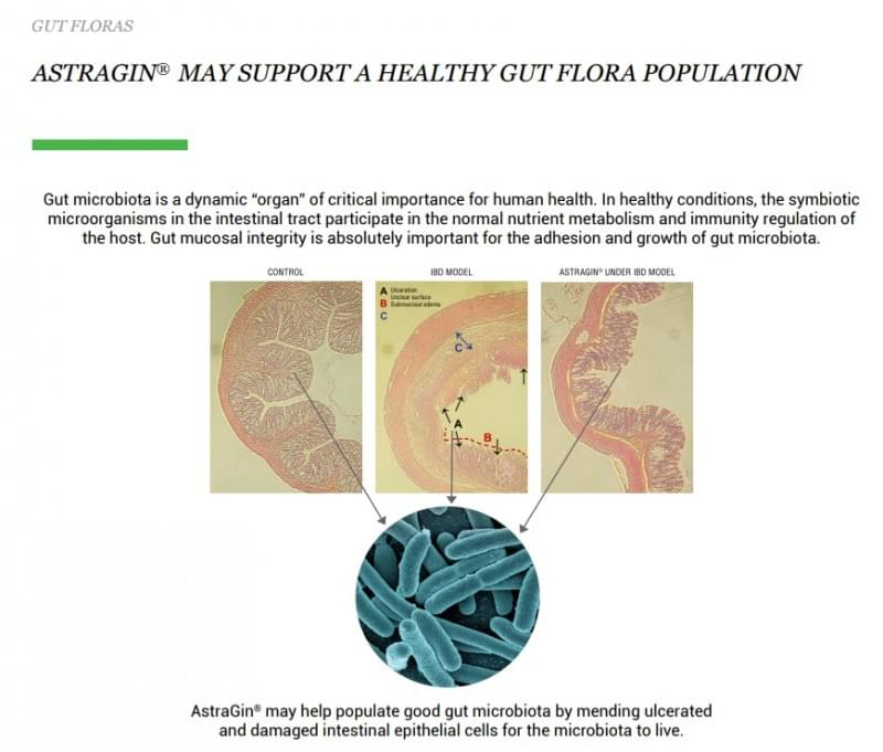 AstraGin-Healthy Gut