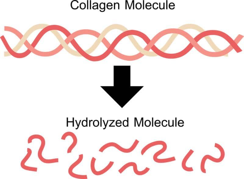 Collagen+-Think Again-Molecule